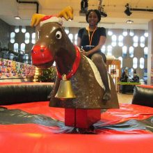 Bucking Bronco Hire; Rodeo Bull Hire